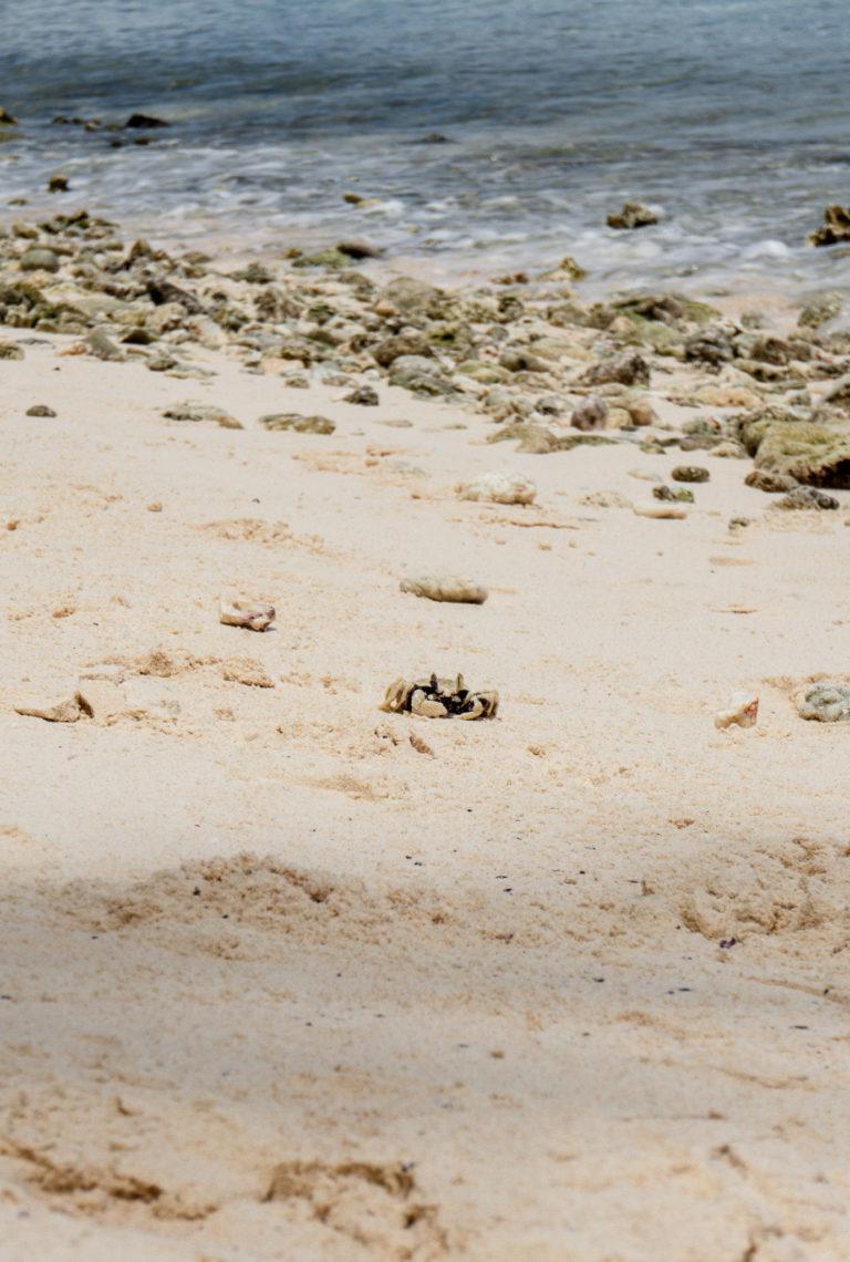 Sharks Cove Beach