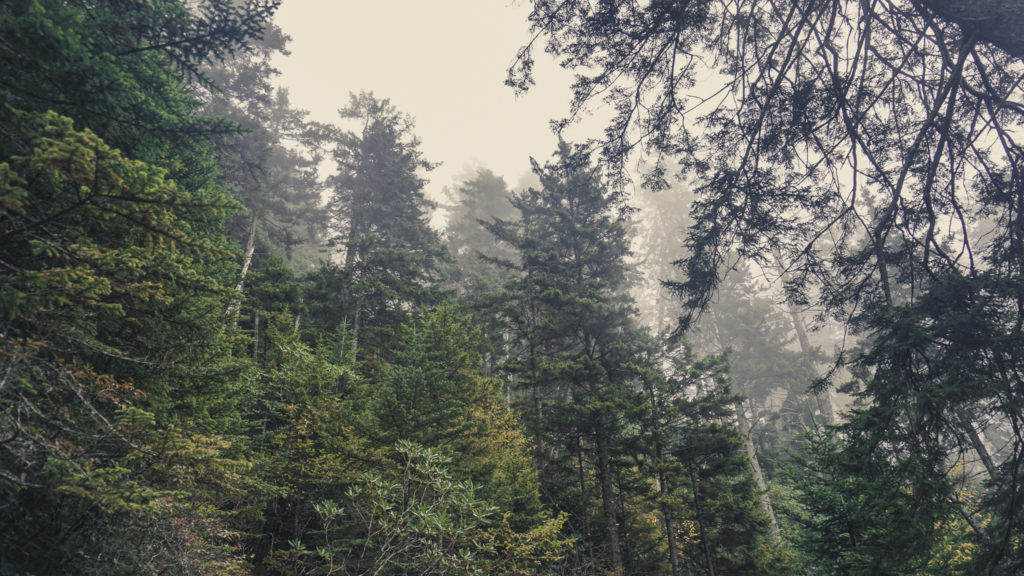 Hiking to Mount Le Conte