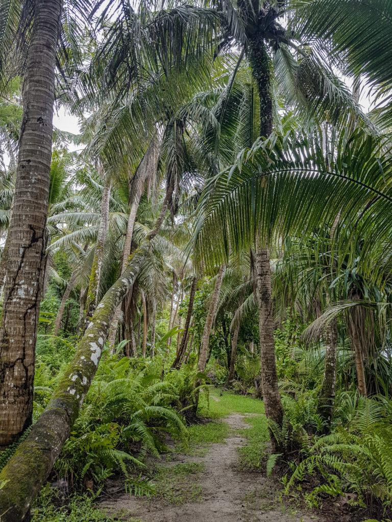 Visiting Guam - Ritidian Point