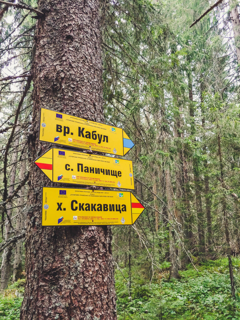 Hiking Signs on a Tree in Bulgaria